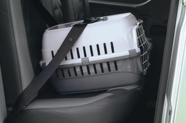 PANIER DE TRANSPORT POUR CHAT ' ROADRUNNER '