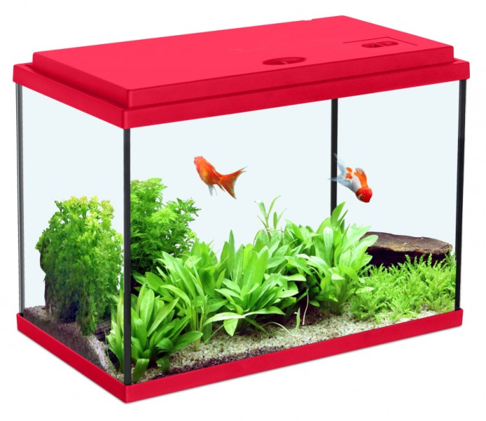 Aquariums poisson animaloo for Image aquarium poisson rouge
