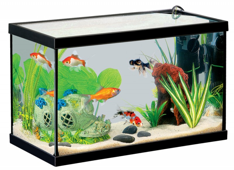 Pin la lettre z coloriage on pinterest for Aquarium 1 poisson