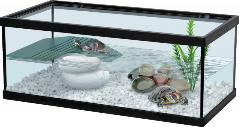 Aquarium tortue amphibien enclos animaloo for Aquarium tortue